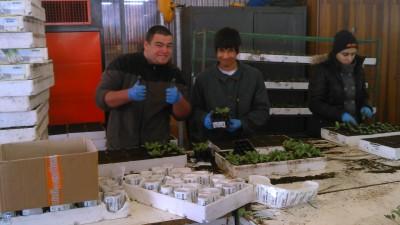 Nos productions horticoles : Pierre et Grégoire en entreprise à Colognola ai Colli